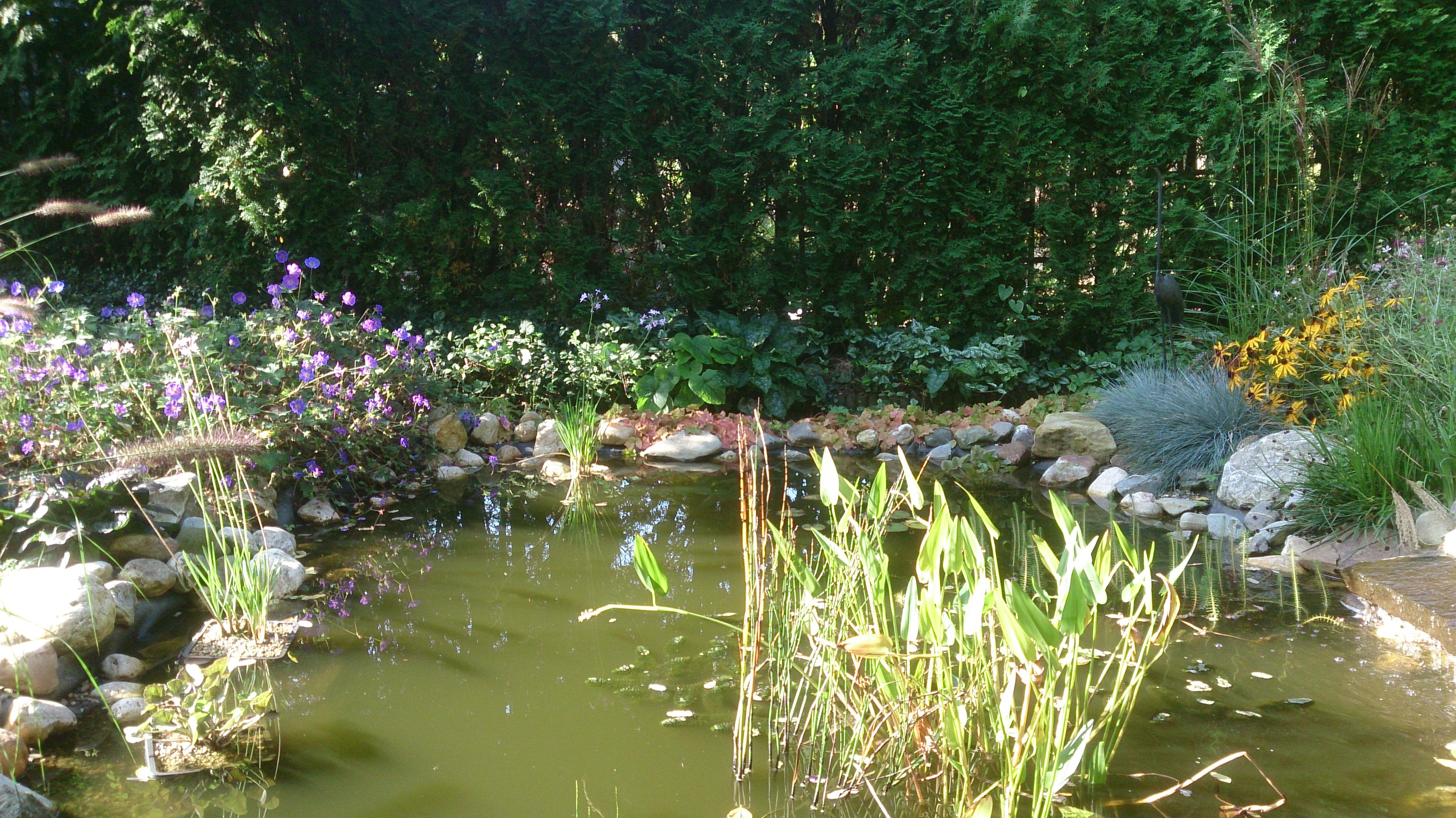 De mildert tuinen website weelderige tuin met for Vijver in tuin