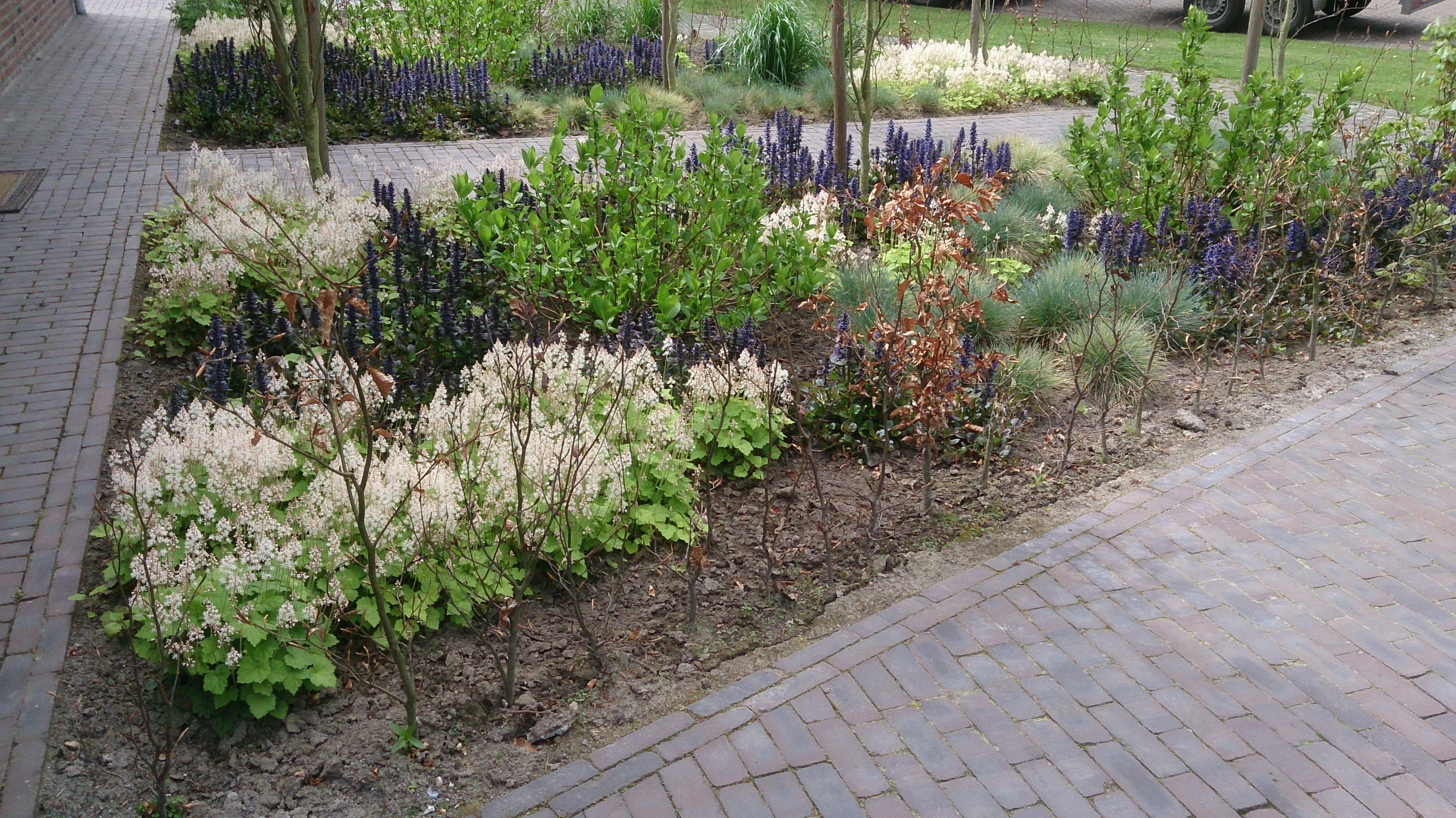 De mildert tuinen website stijlvolle moderne voortuin for Voortuin strak modern